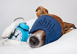 Hebben dieren ook slaapproblemen?