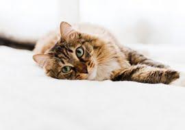 Hoe kan ik mijn ernstig zieke huisdier helpen?