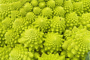 Fractals in homeopathie