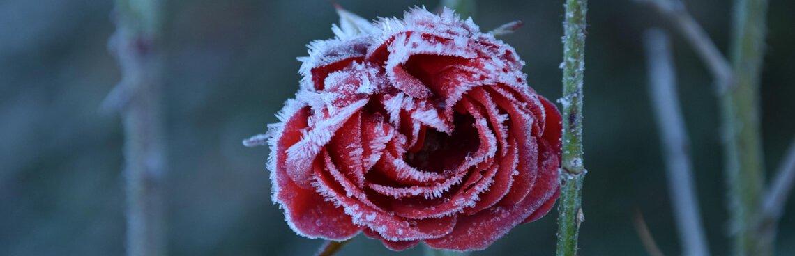 Winter bij de Vereniging Homeopathie