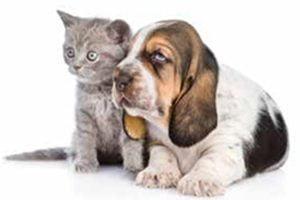 Homeopathie bij dieren