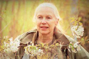 Els Mertens over homeopathie bij rouw