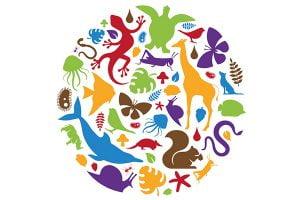 Het dierenrijk in de homeopathie
