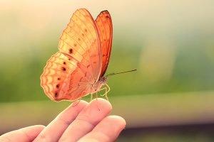 Vlinders in de homeopathie